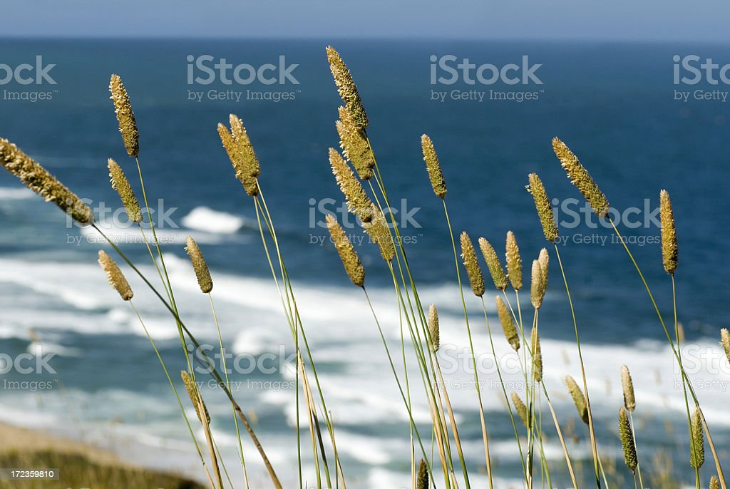 Wild Grasses - Ocean Background royalty-free stock photo