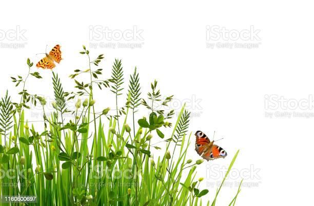 Photo of Wild green grass and butterflies
