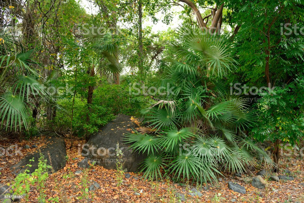 wild green nature in the mountains stock photo