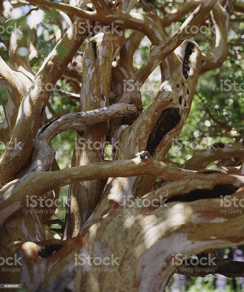 Wild growing branches royalty-free stock photo