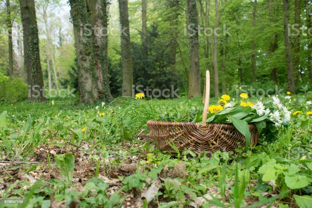 wild herbs – Foto
