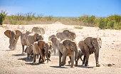 Wild Herd of African Elephants Walking to a waterhole in Etosha National Park Namibia, Africa.