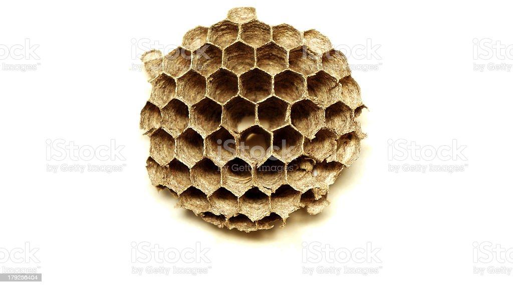 wild honeycomb royalty-free stock photo