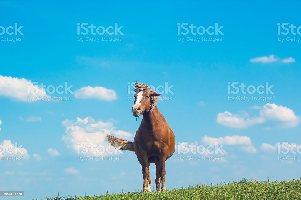 Wild horse brown color on grass. Domestic animal horse on pasture....