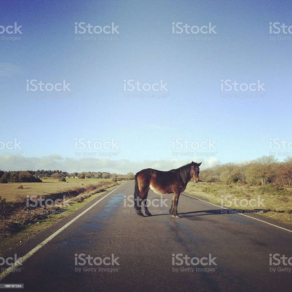 Wild Horse crossing the road in New Forest, England stock photo