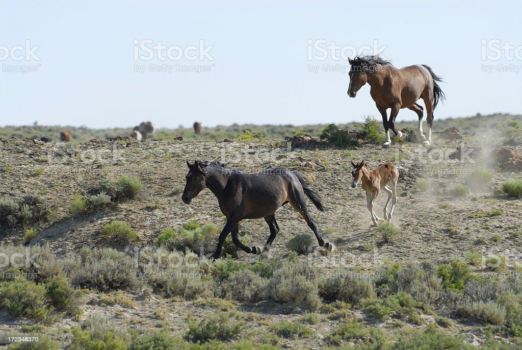 Wild Horse Family royalty-free stock photo