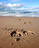 Wild horse footprints on a sandy, rugged ocean beach with cloudy sky near the small town of Portrush, Northern Ireland.