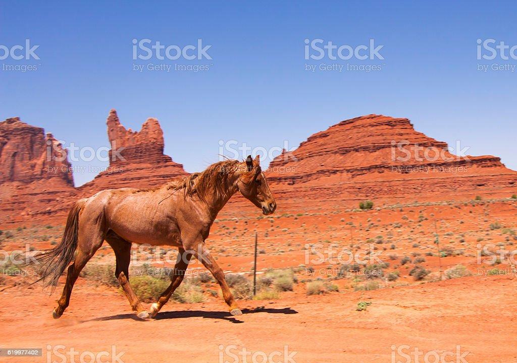 Wild horse galloping across the red desert stock photo