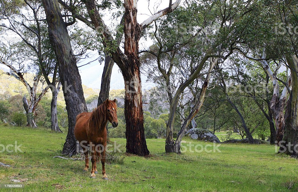 Wild Horse in Meadow royalty-free stock photo