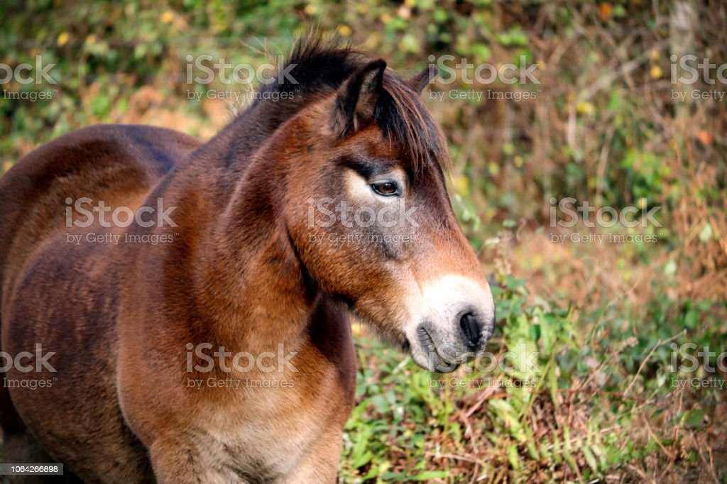 Wild horse outdoors stock photo