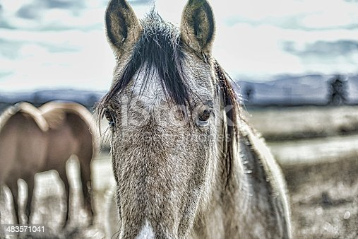 Wild Horse with thick winter coat, Northwestern Montana