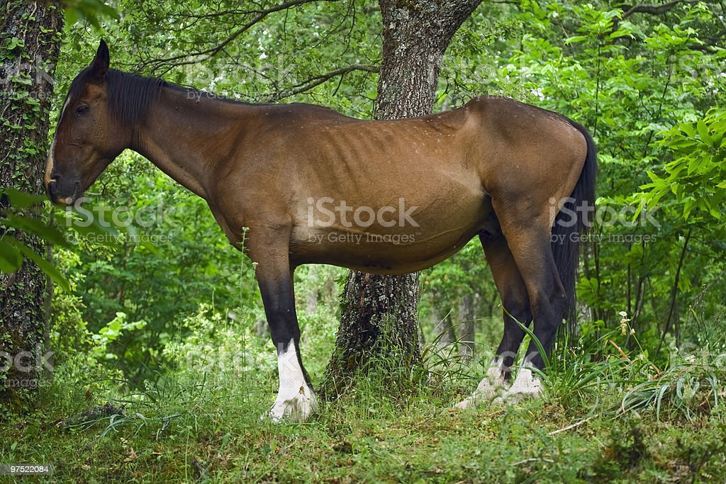 Wild horse royalty-free stock photo