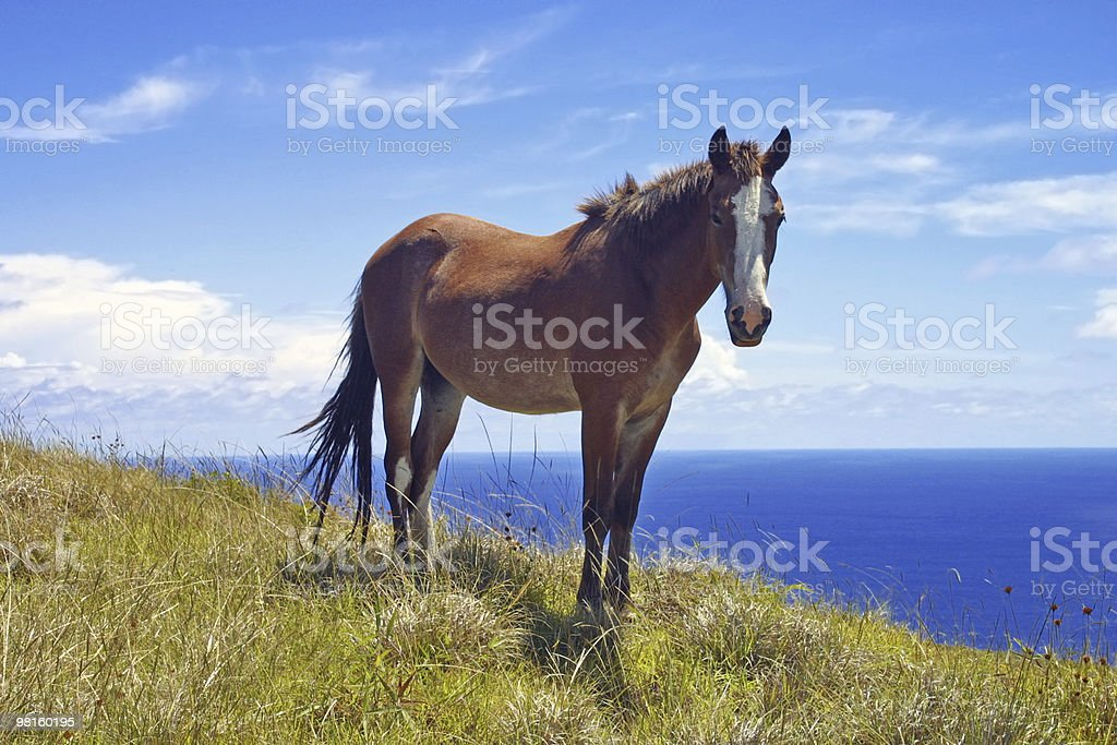 Wild Horse foto stock royalty-free