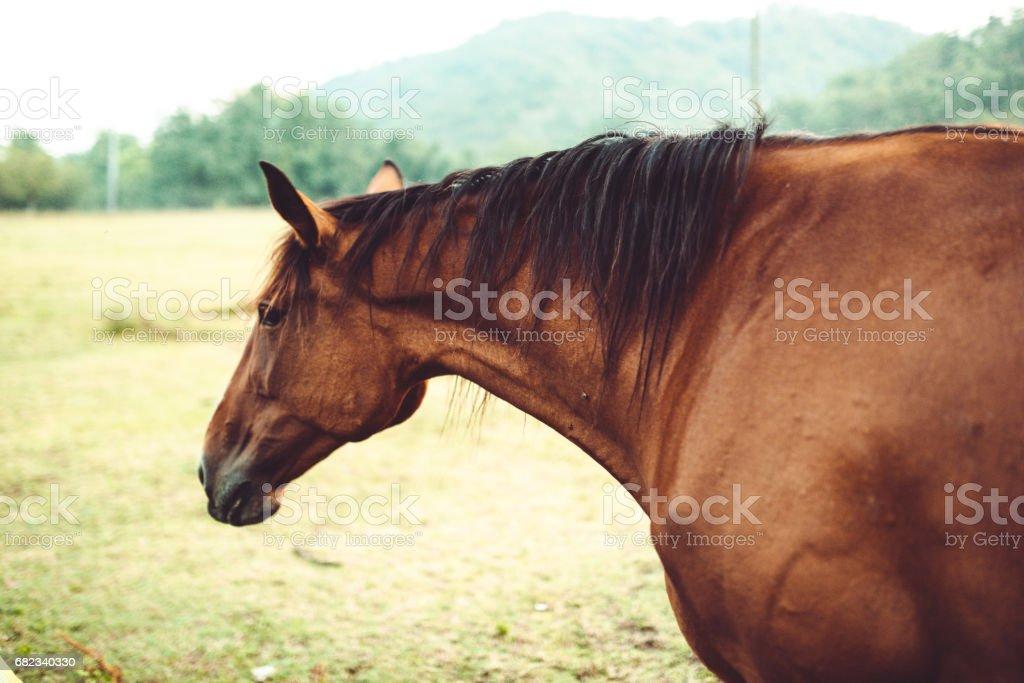 wild horse portrait zbiór zdjęć royalty-free