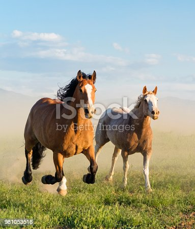 Wild Horse Running Through The Grass In Utah