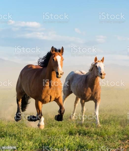 Wild horse running through the grass in utah picture id981053516?b=1&k=6&m=981053516&s=612x612&h=j4ym40ut7use3exueukk0vewedlr9m5w9r21mspag0g=