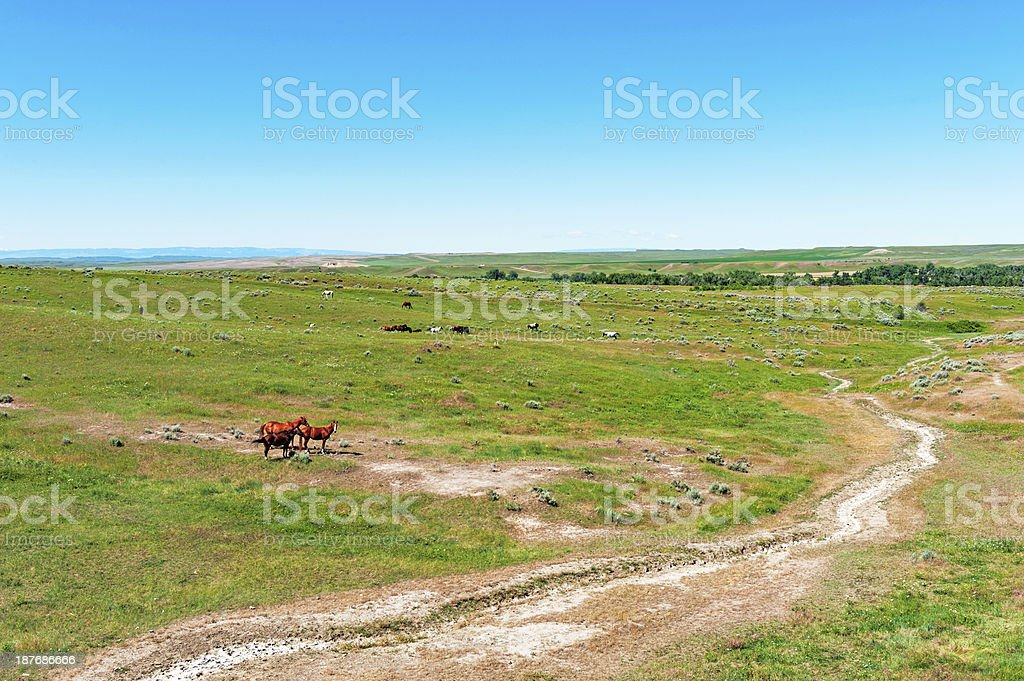 Wild Horses at Little Big Horn stock photo