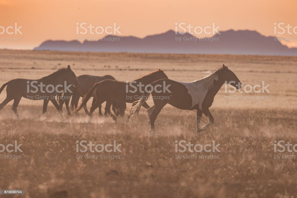Wild Horses At Sunset Stock Photo Download Image Now Istock