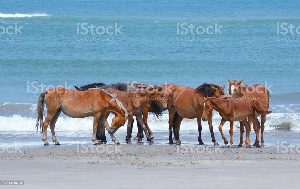 wild horses by the ocean royalty-free stock photo
