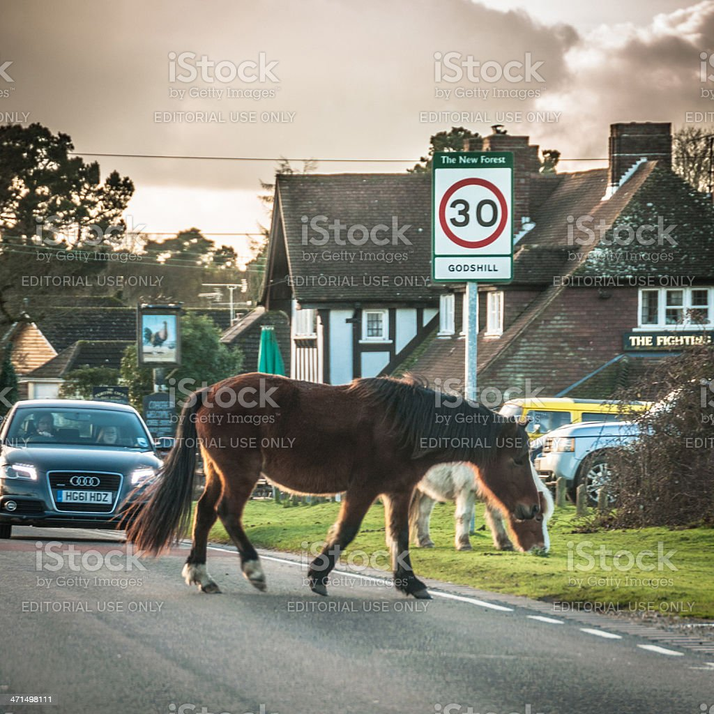 Wild horses crossing the road at Godshill, New Forest, England stock photo