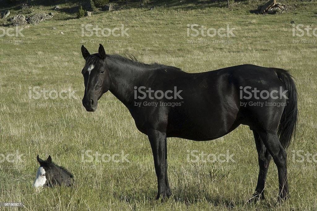 Wild Horses From The Black Hills Sanctuary Stock Photo Download Image Now Istock
