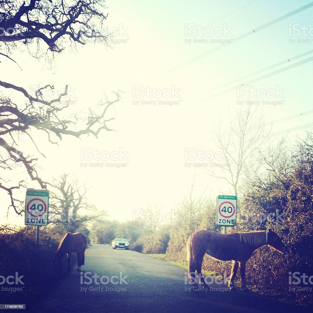 Wild horses grazing by the road at New Forest, England stock photo