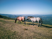 Horse farming. Mustangs living in the wild high up in the mountains.