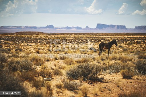 Wild horses grazing near Monument Valley in USA