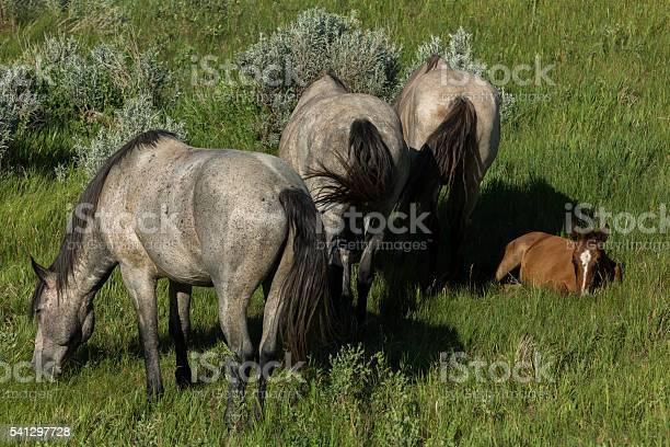 Wild horses grazing picture id541297728?b=1&k=6&m=541297728&s=612x612&h=6czjbhg3xpvi7uzkrfpw6ubsqa3h cqmbmgk0ijjx2c=
