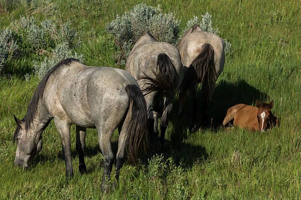 Wild horses grazing picture id541297728?b=1&k=6&m=541297728&s=612x612&w=0&h=xip2i amzij2mfgf5v 3ymqsiy5lx4xlpiokv7ix9fa=