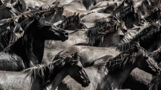 Wildpferde II – Foto