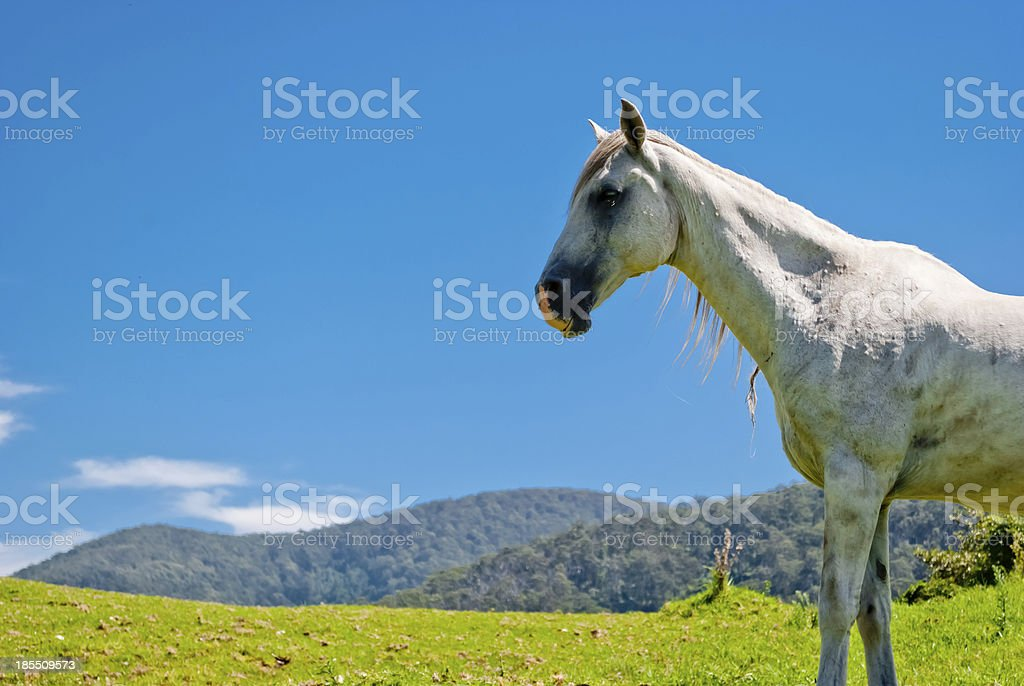 Wild horses in a natural landscape royalty-free stock photo