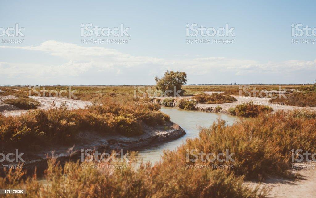 Wild Horses in Camargue stock photo