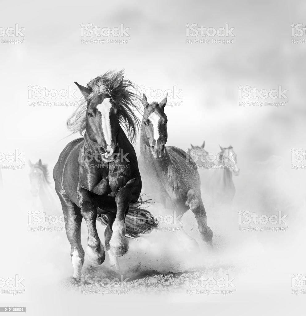 Wild horses in monochromatic tones stock photo
