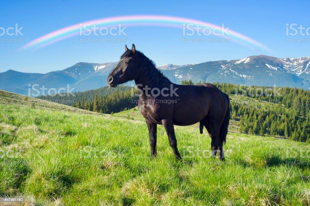 Wild horses in the Carpathians stock photo