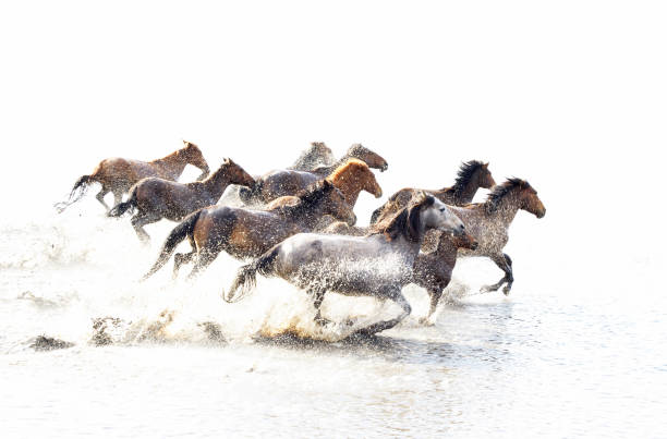 Wild Horses of Anatolia stock photo