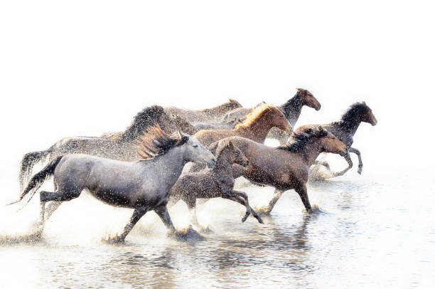 wild horses of anatolia - power in nature stock photos and pictures