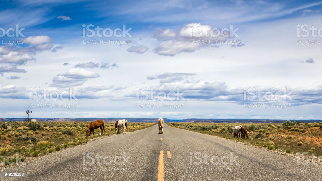 Wild Horses on the Trail Of The Ancients Scenic Byway stock photo