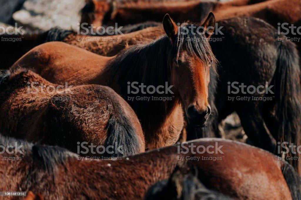 Wilde Pferde – Foto