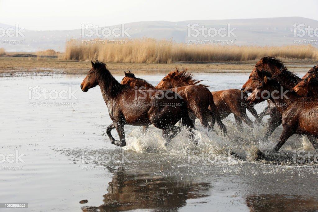 Wild Horses Stock Photo Download Image Now Istock