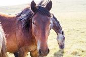 Wild horses in wilderness