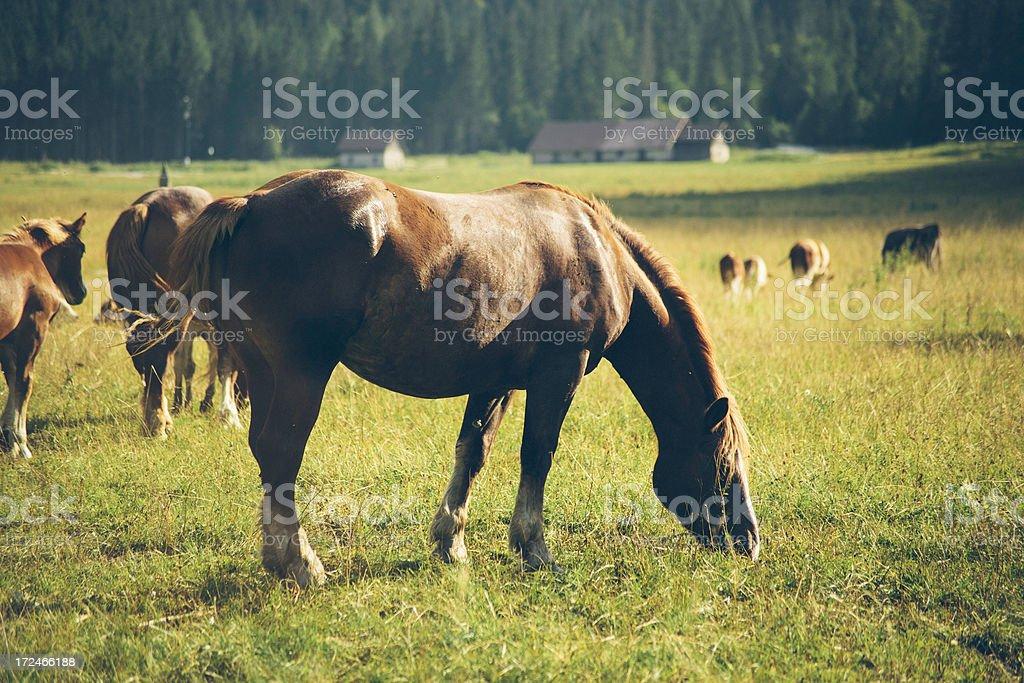 Wild Horses royalty-free stock photo