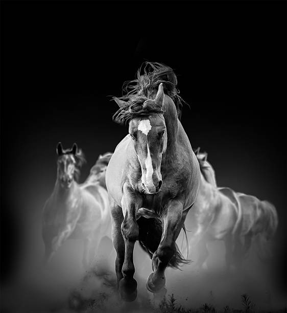 wild horses wild horses running in the dark in dust stallion stock pictures, royalty-free photos & images