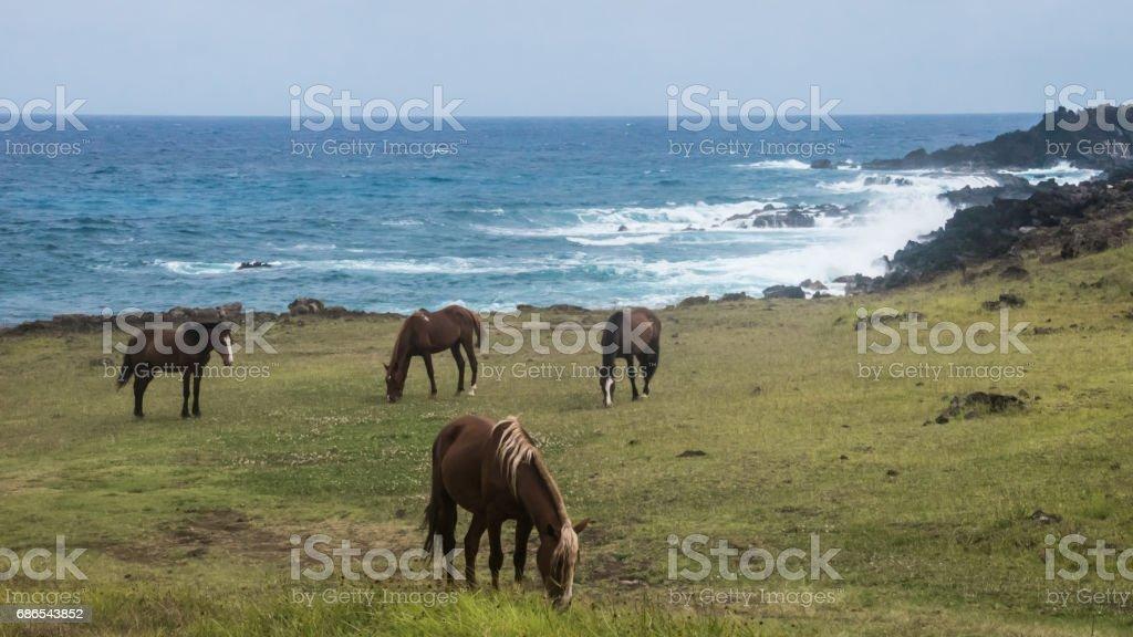 wilde paarden royalty free stockfoto
