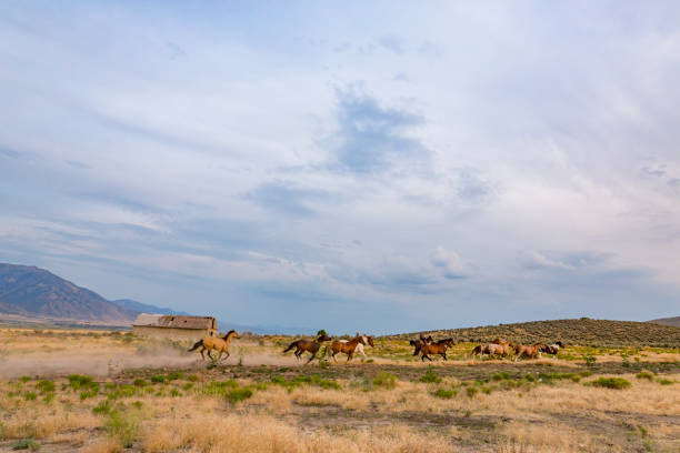 Wild horses running across a field picture id871438112?b=1&k=6&m=871438112&s=612x612&w=0&h=hsbaay ia9ghuz9f7rbmit9j8vdjzcftd70bs26jmow=