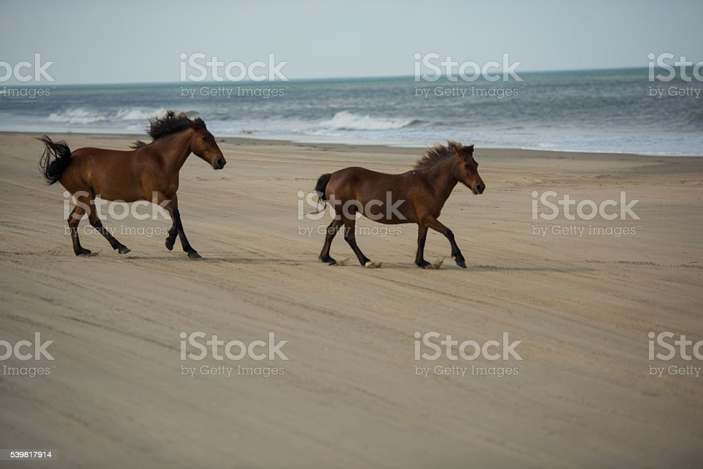 Wild Horses Running Along The Beach Stock Photo Download Image Now Istock