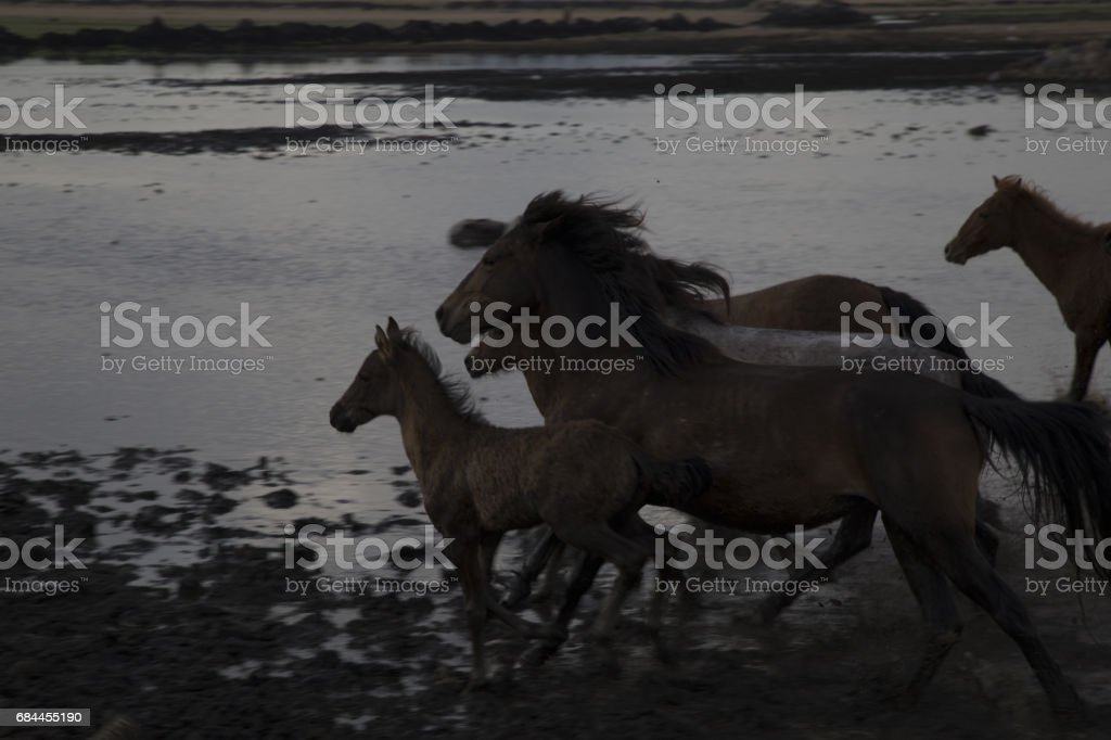 Wild Horses Running Fast Stock Photo Download Image Now Istock