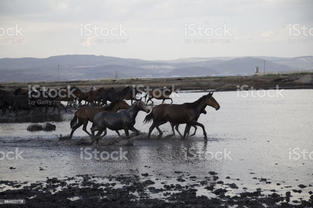 Wild Horses Running Fast Stock Photo More Pictures Of Animal Istock