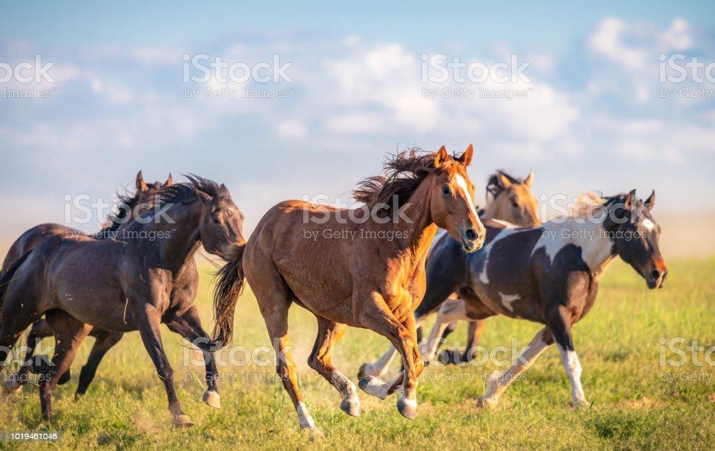 Vahşi atlar running Free - Royalty-free ABD Stok görsel