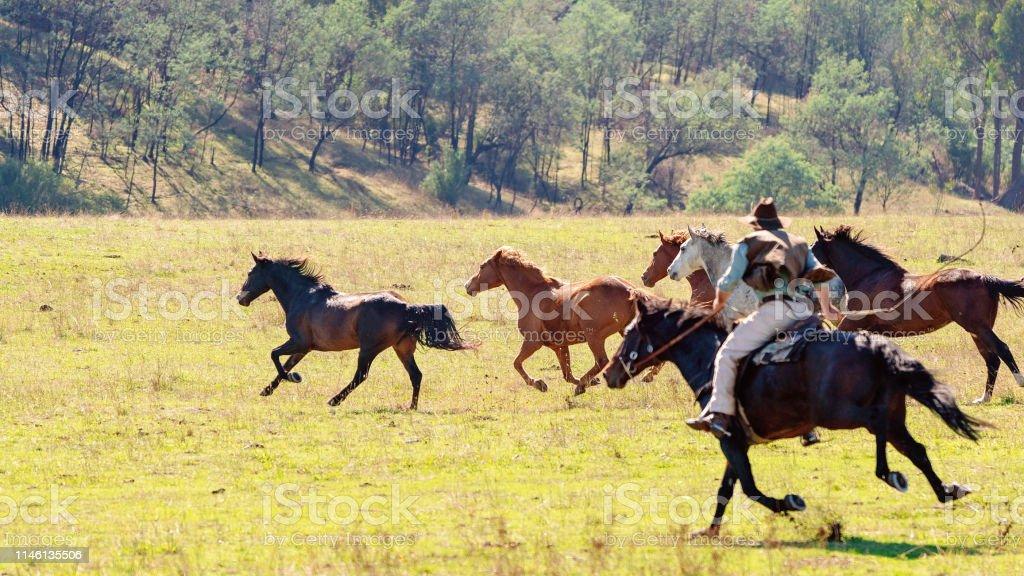 Wild Horses Running Free Stock Photo Download Image Now Istock